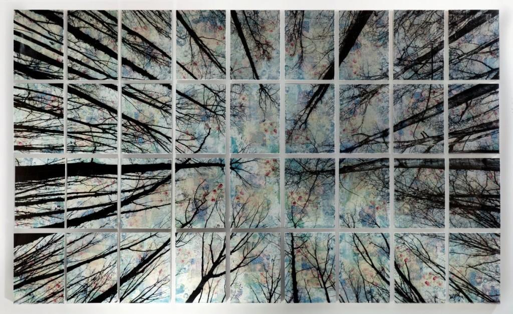 alberi-145x240